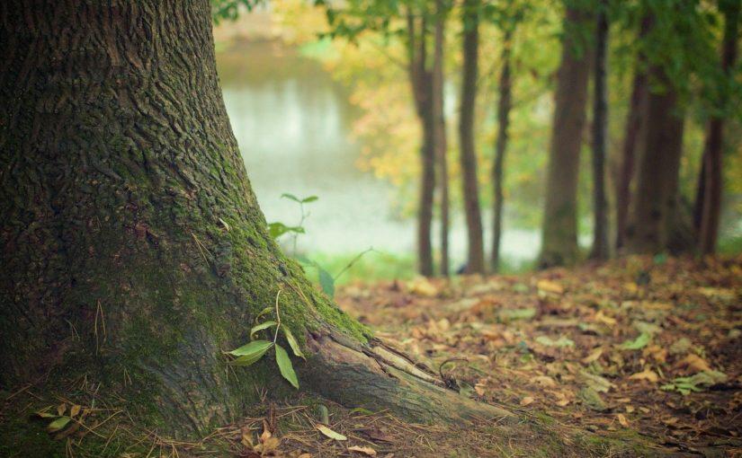 Przepiękny i {porządny zieleniec to nie lada wyzwanie, zwłaszcza jak jego pielęgnacją zajmujemy się sami.